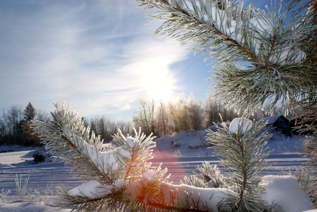 landscape framed by frosty spruce